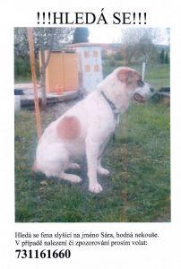 Plakátek ztracený pes